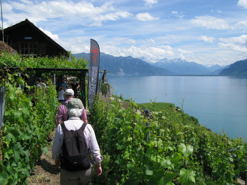 Stroll above Lac Léman in the Lavaux Region, and awaken your senses too!